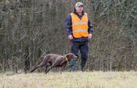 подготовка к охоте легавых собак